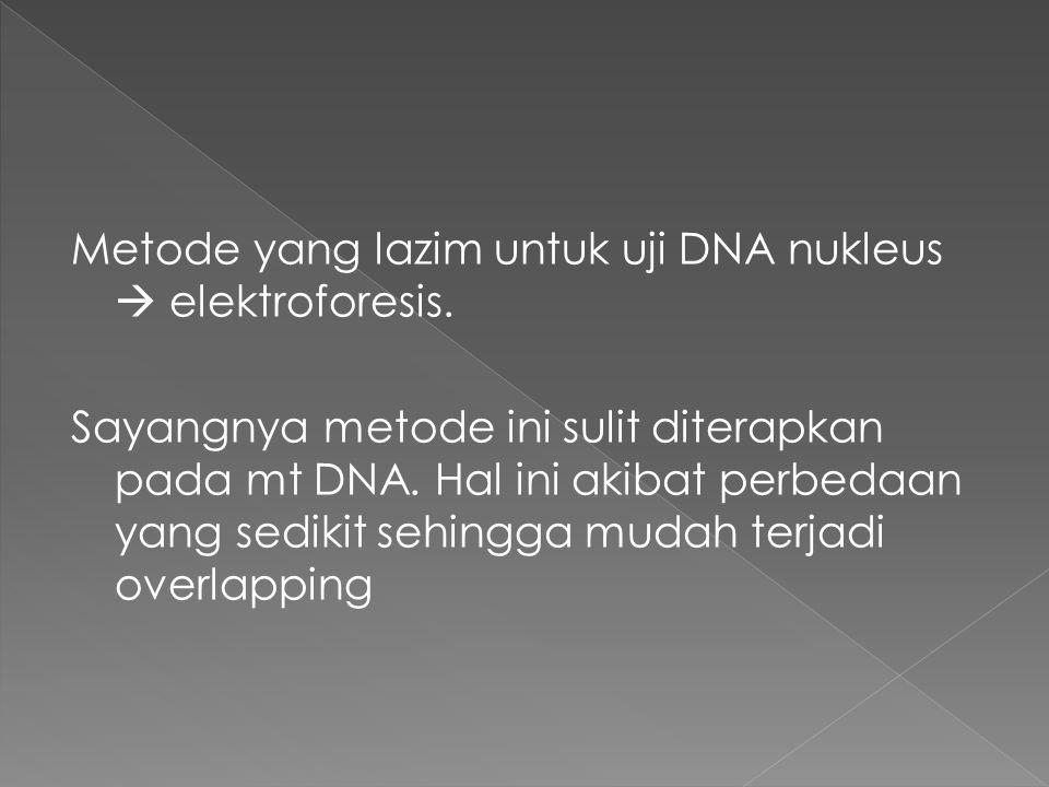 Metode yang lazim untuk uji DNA nukleus  elektroforesis