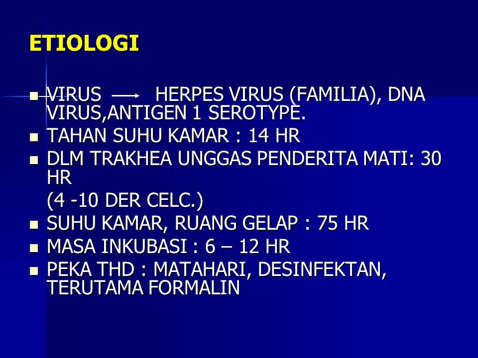 ETIOLOGI VIRUS HERPES VIRUS (FAMILIA), DNA VIRUS,ANTIGEN 1 SEROTYPE.