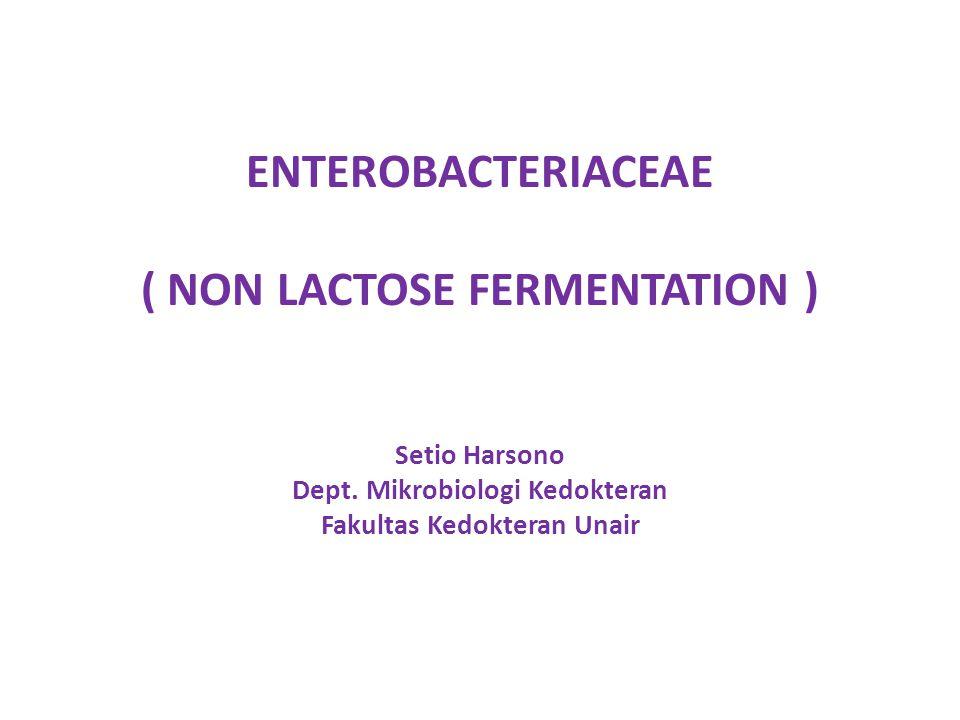 ENTEROBACTERIACEAE ( NON LACTOSE FERMENTATION )