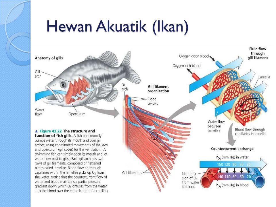 Hewan Akuatik (Ikan)