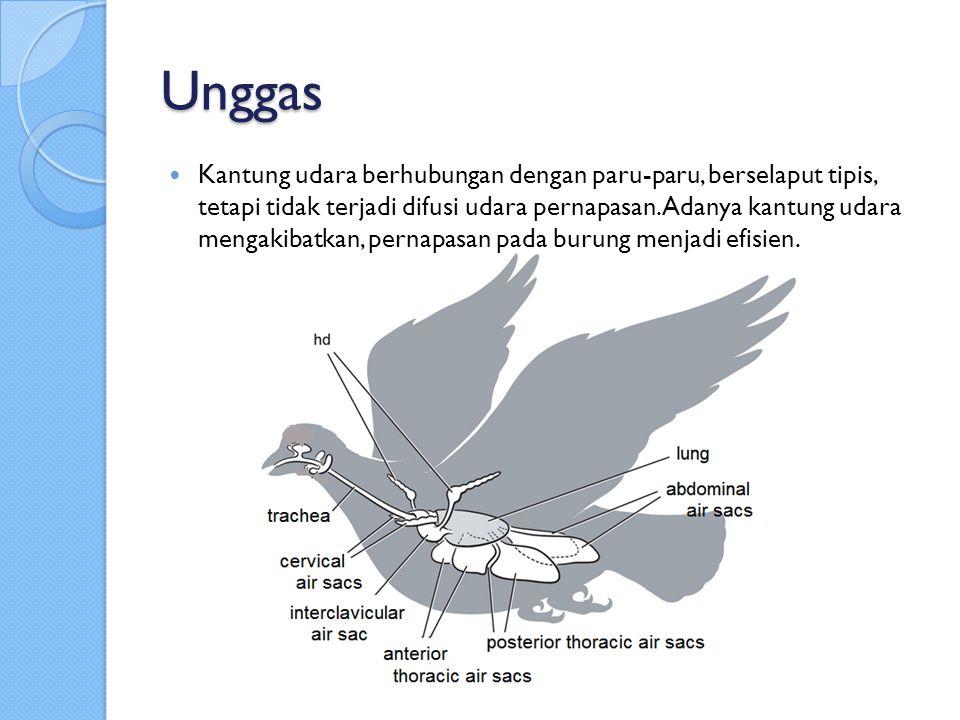 Unggas
