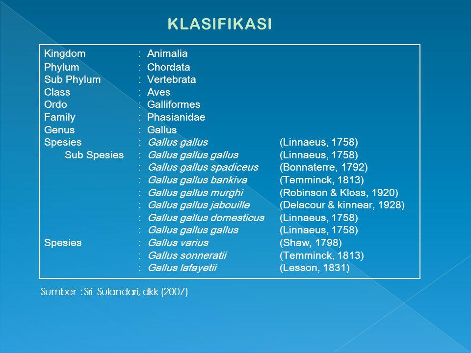 KLASIFIKASI Kingdom : Animalia Phylum : Chordata