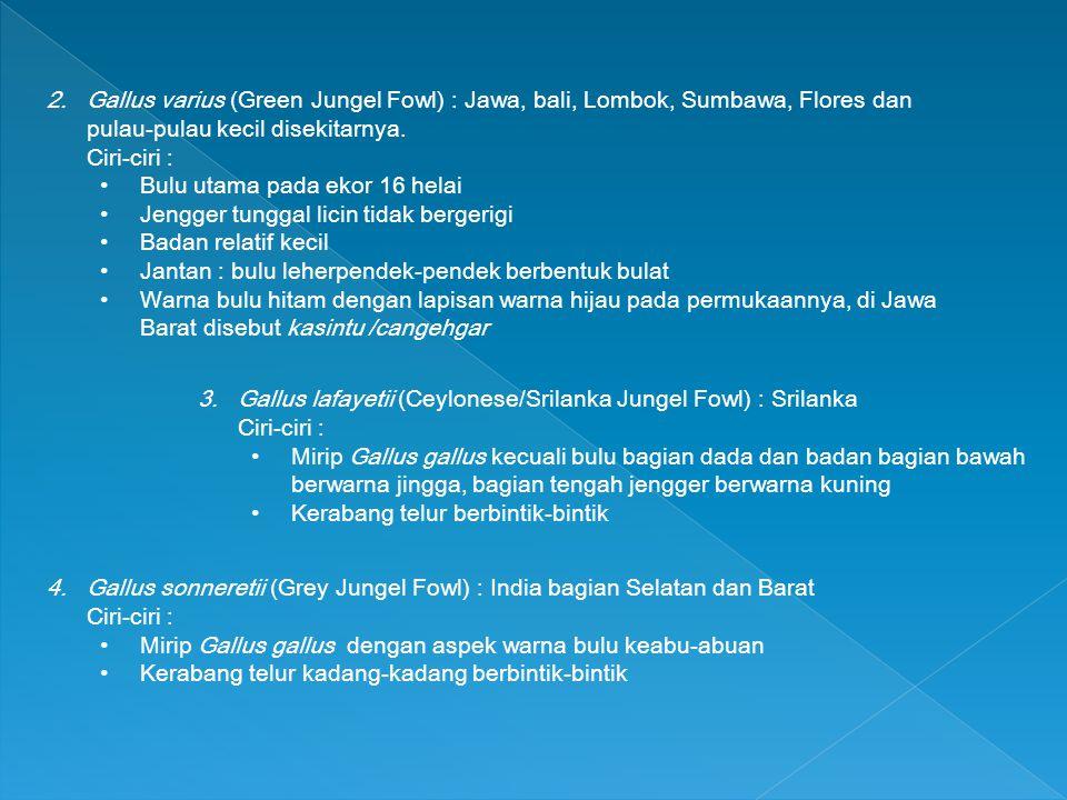 Gallus varius (Green Jungel Fowl) : Jawa, bali, Lombok, Sumbawa, Flores dan pulau-pulau kecil disekitarnya.