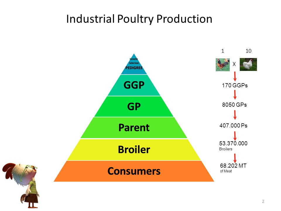 Industrial Poultry Production