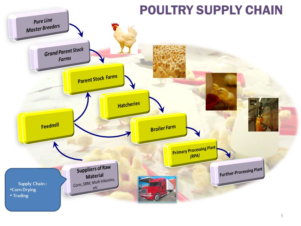 POULTRY SUPPLY CHAIN Pure Line Master Breeders Grand Parent Stock