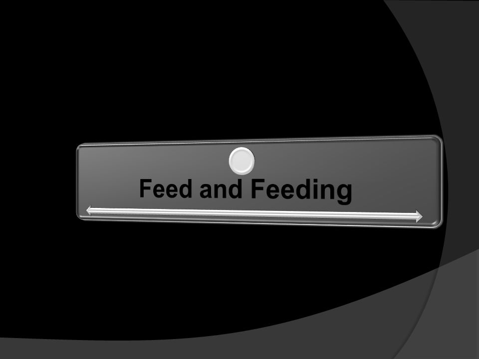 Feed and Feeding