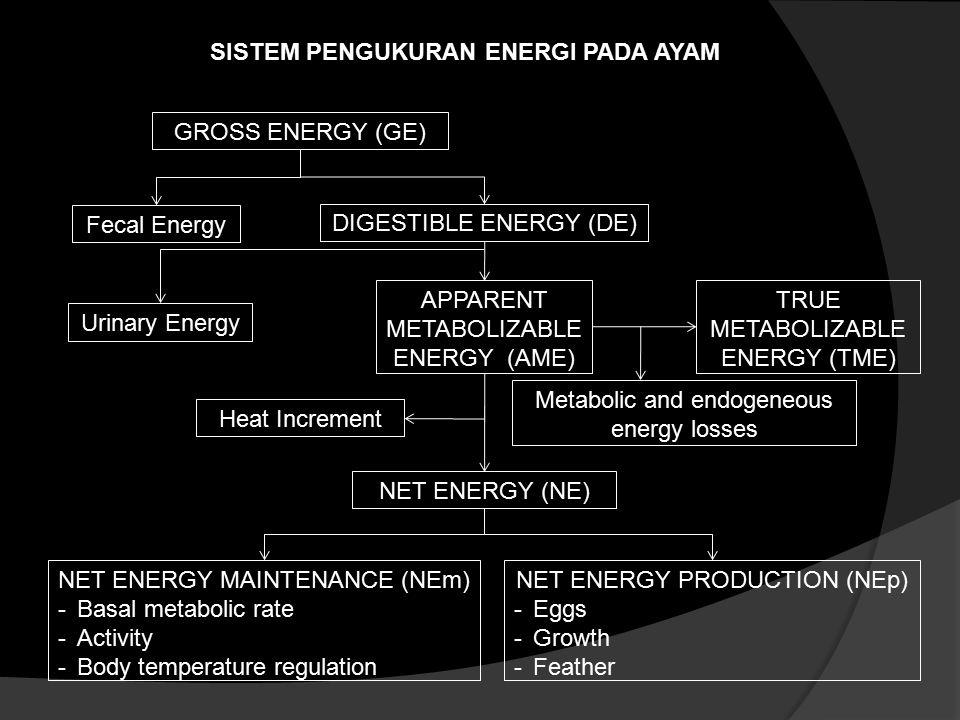 SISTEM PENGUKURAN ENERGI PADA AYAM