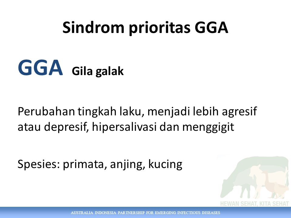 GGA Gila galak Sindrom prioritas GGA