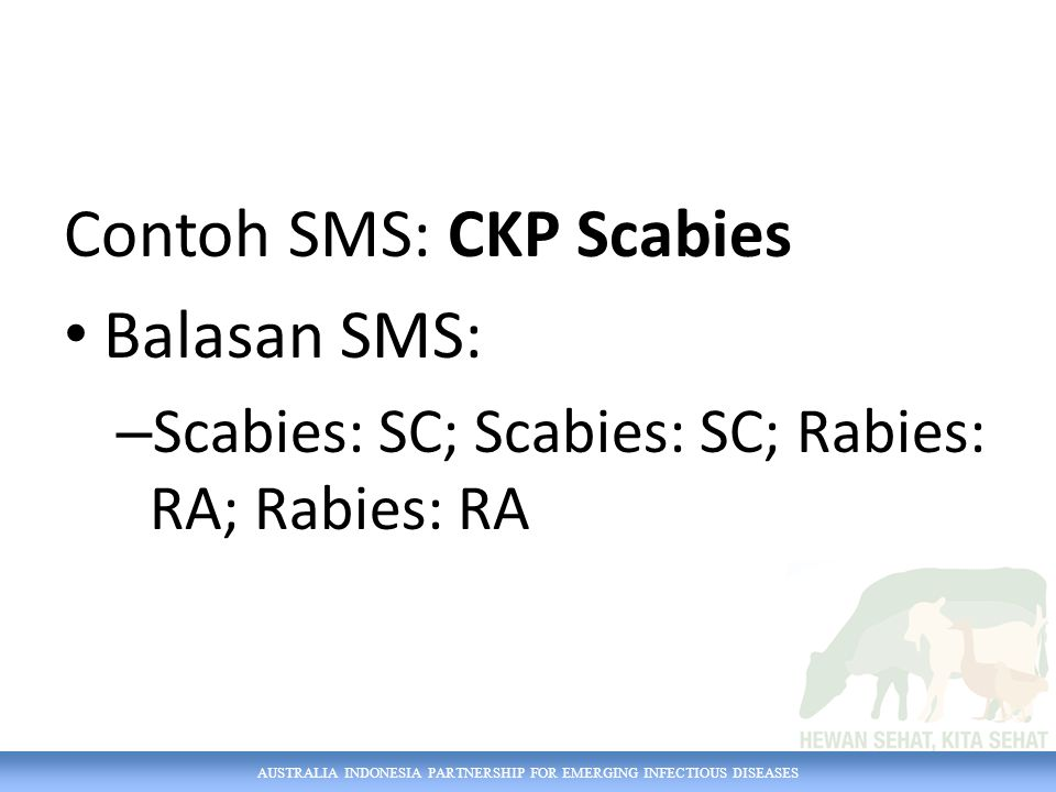 Contoh SMS: CKP Scabies Balasan SMS: