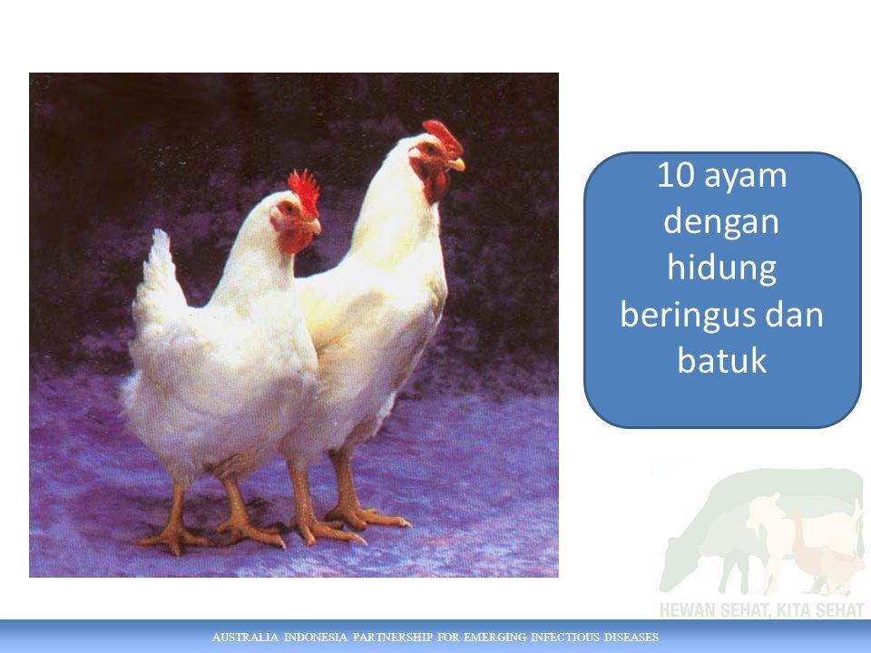 10 ayam dengan hidung beringus dan batuk