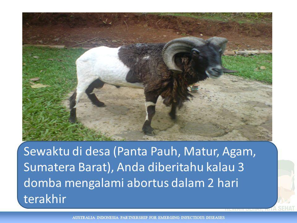 Sewaktu di desa (Panta Pauh, Matur, Agam, Sumatera Barat), Anda diberitahu kalau 3 domba mengalami abortus dalam 2 hari terakhir