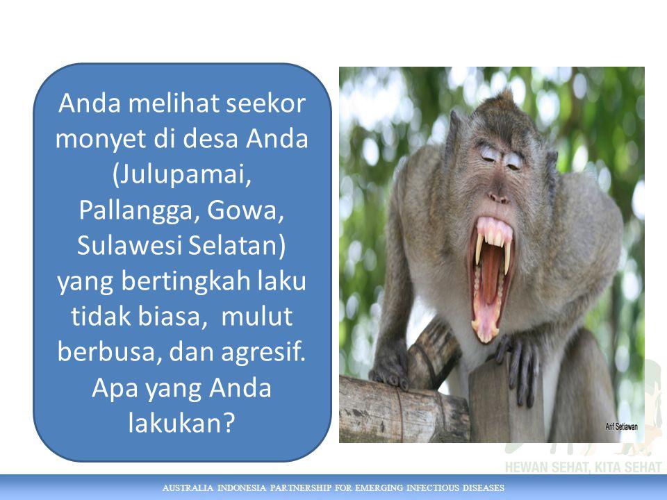Anda melihat seekor monyet di desa Anda (Julupamai, Pallangga, Gowa, Sulawesi Selatan) yang bertingkah laku tidak biasa, mulut berbusa, dan agresif. Apa yang Anda lakukan