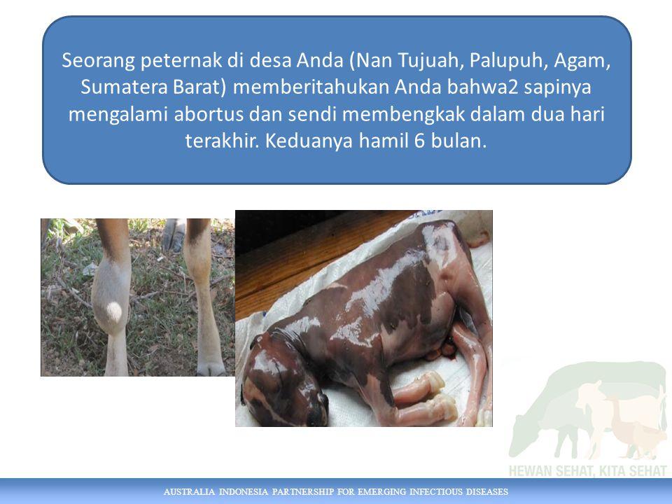 Seorang peternak di desa Anda (Nan Tujuah, Palupuh, Agam, Sumatera Barat) memberitahukan Anda bahwa2 sapinya mengalami abortus dan sendi membengkak dalam dua hari terakhir. Keduanya hamil 6 bulan.