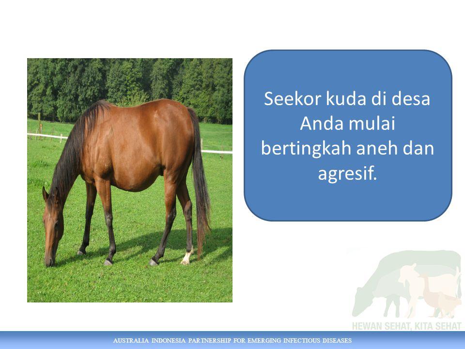 Seekor kuda di desa Anda mulai bertingkah aneh dan agresif.