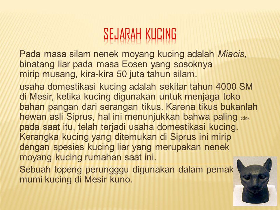 SEJARAH KUCING