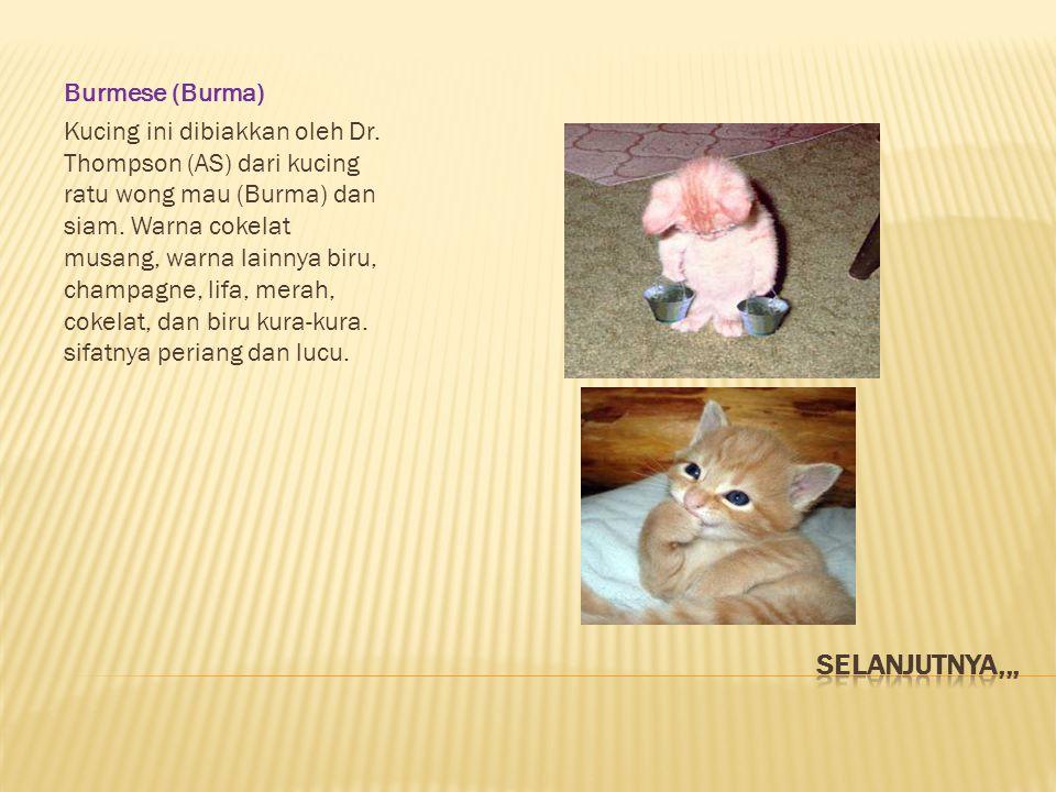 Selanjutnya,,, Burmese (Burma)