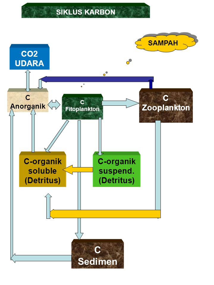C Sedimen CO2 UDARA C Zooplankton C-organik soluble (Detritus)