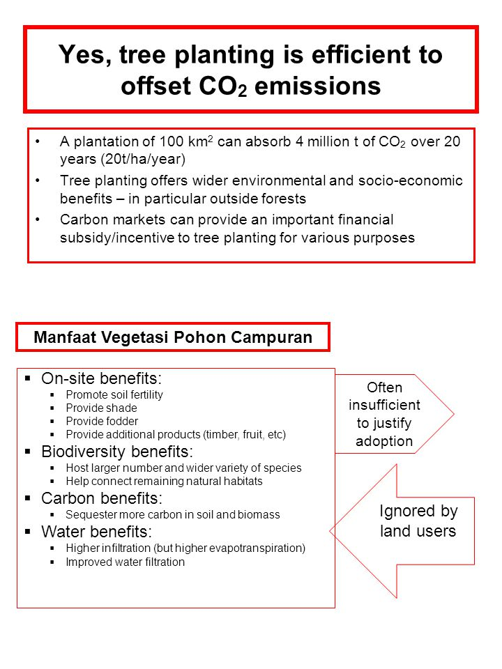 Yes, tree planting is efficient to offset CO2 emissions