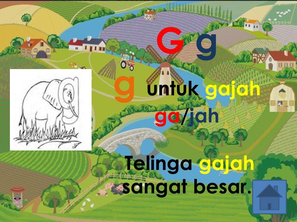 G g g untuk gajah ga/jah Telinga gajah sangat besar.