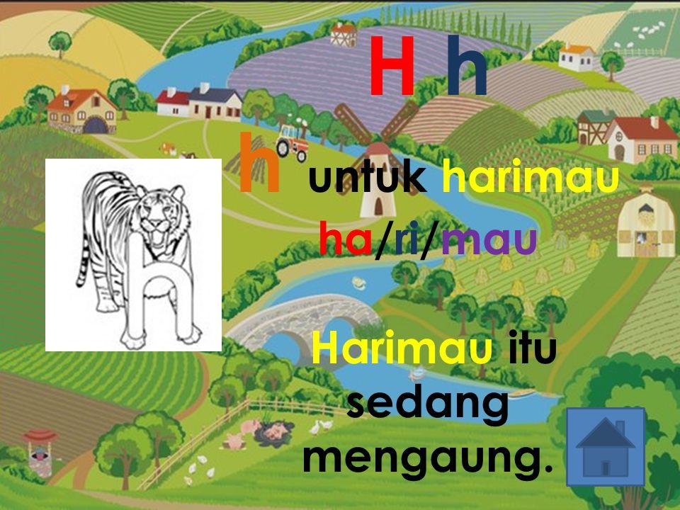 H h h untuk harimau ha/ri/mau Harimau itu sedang mengaung.