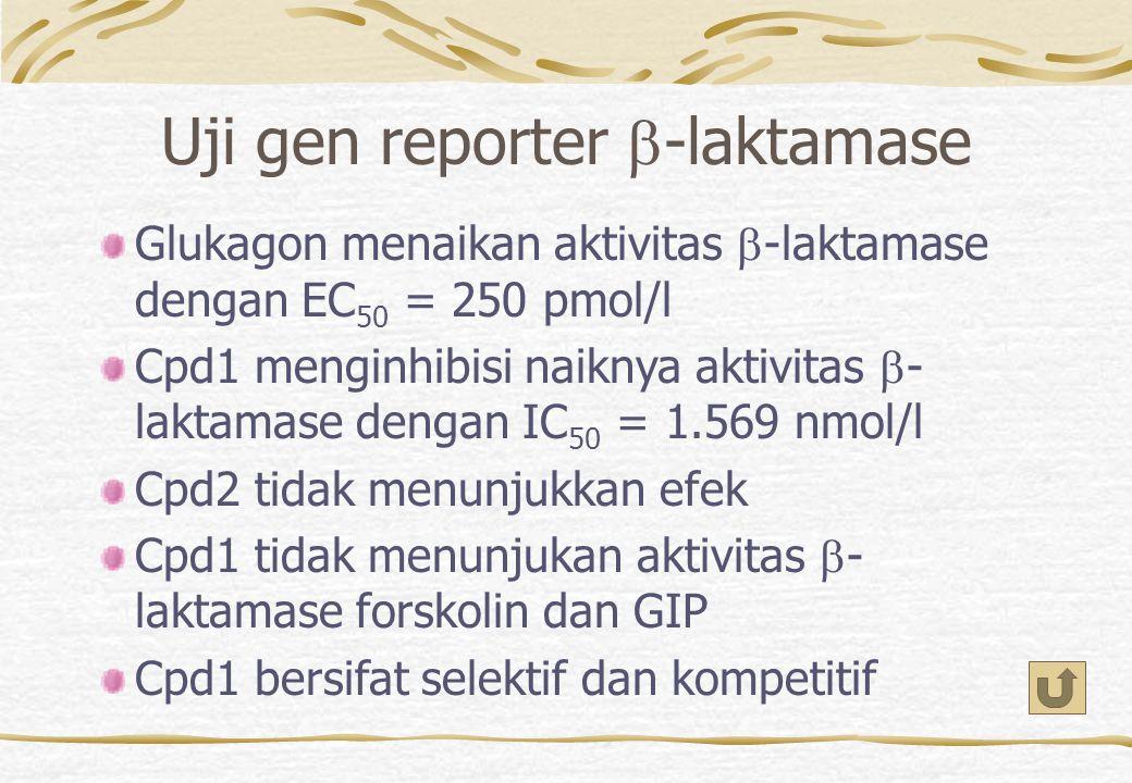 Uji gen reporter b-laktamase