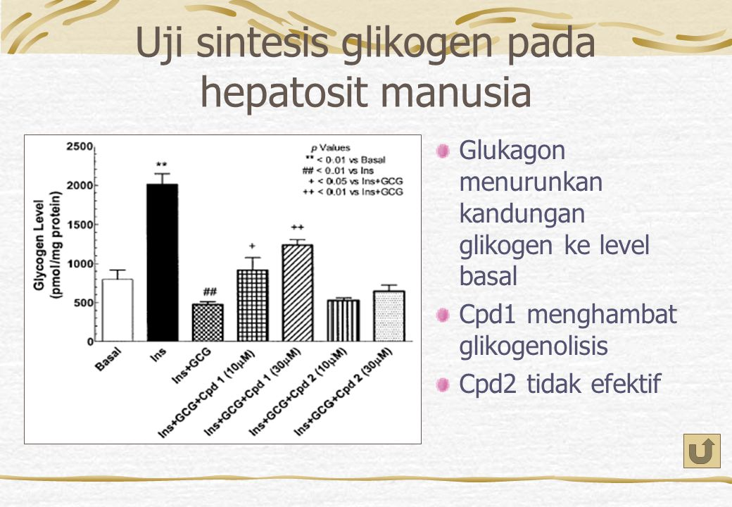 Uji sintesis glikogen pada hepatosit manusia