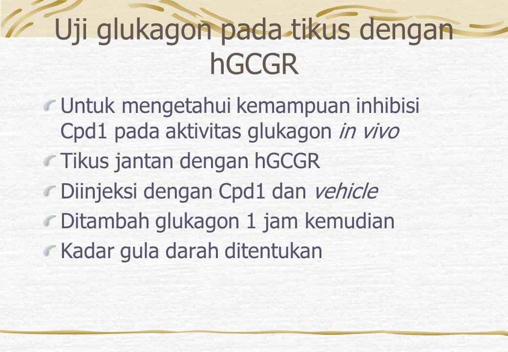 Uji glukagon pada tikus dengan hGCGR