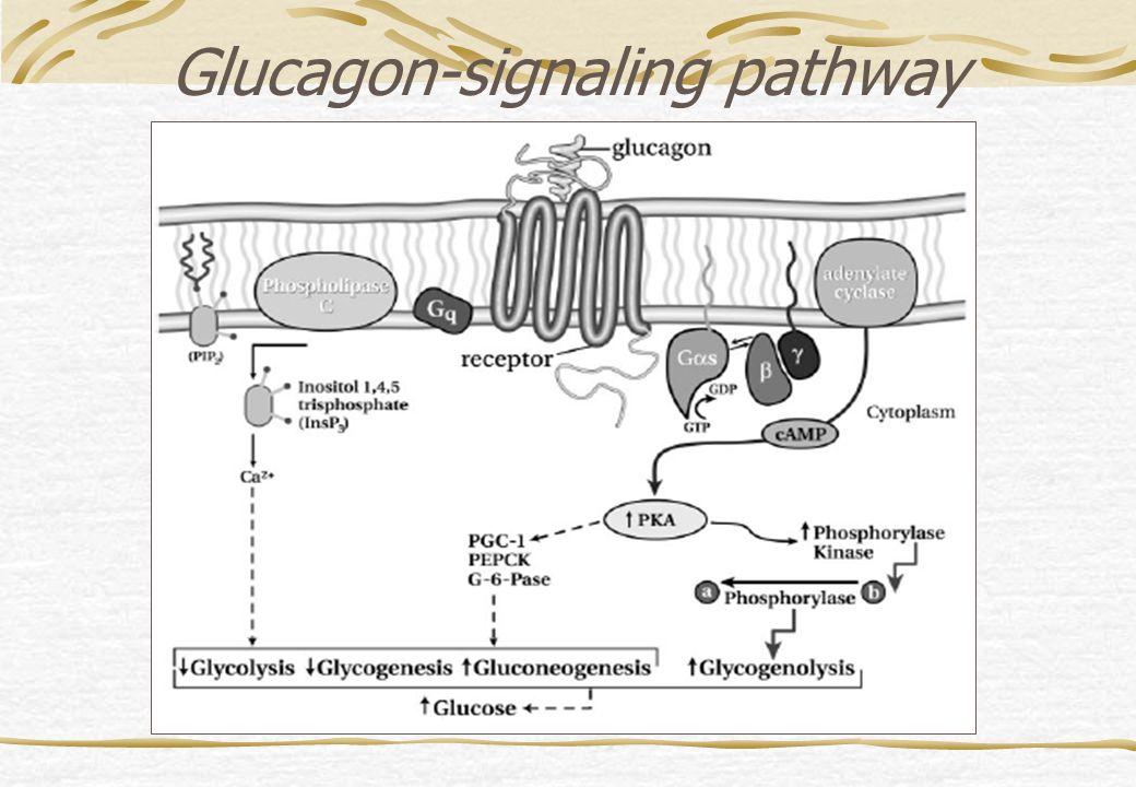 Glucagon-signaling pathway