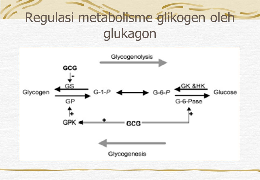 Regulasi metabolisme glikogen oleh glukagon