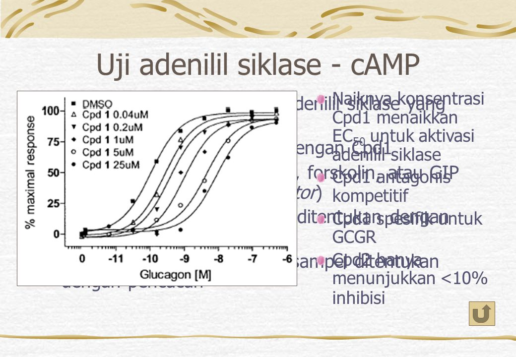 Uji adenilil siklase - cAMP