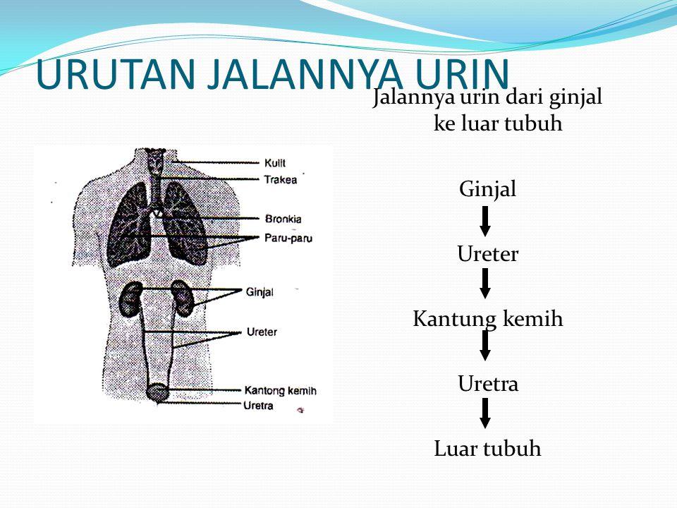 Jalannya urin dari ginjal ke luar tubuh