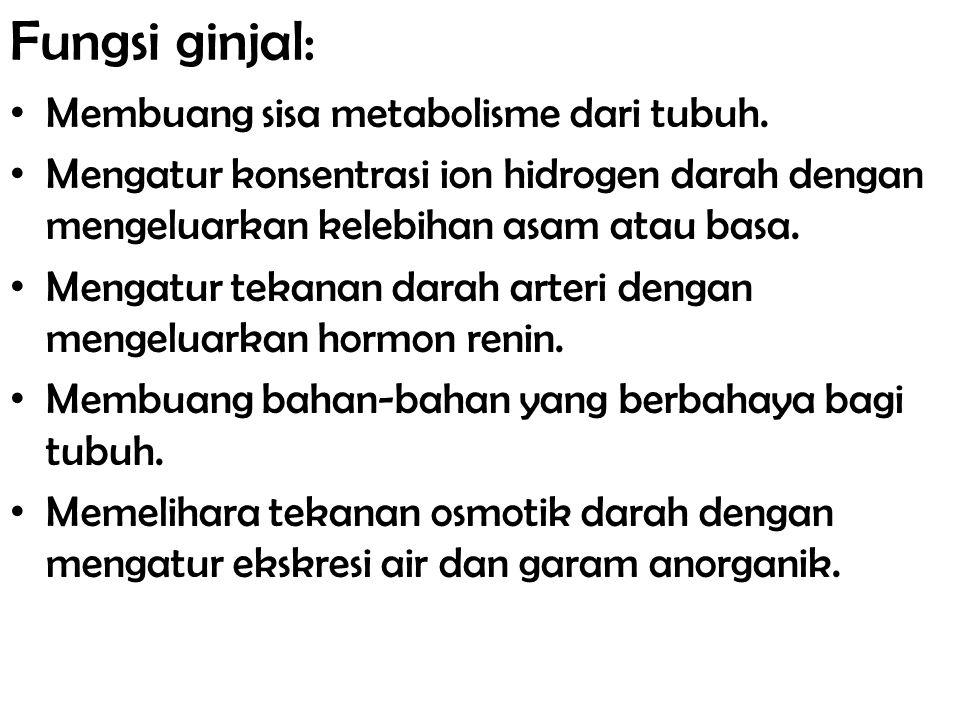 Fungsi ginjal: Membuang sisa metabolisme dari tubuh.