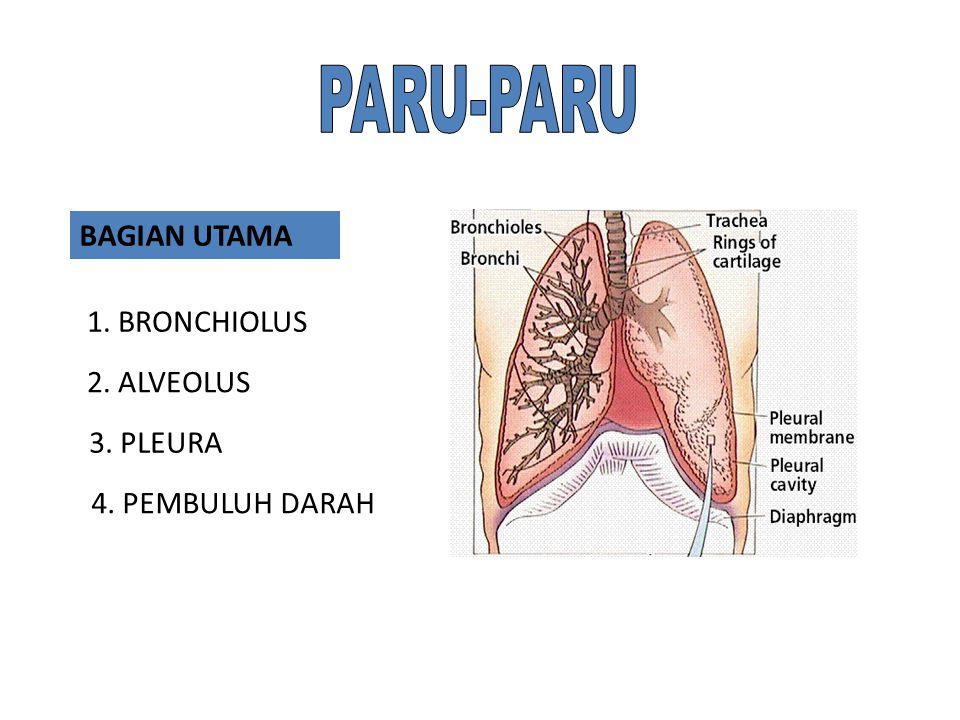 PARU-PARU BAGIAN UTAMA 1. BRONCHIOLUS 2. ALVEOLUS 3. PLEURA