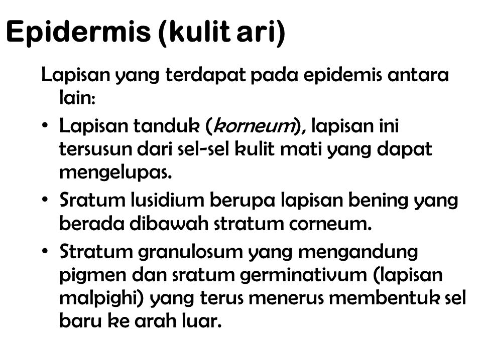 Epidermis (kulit ari) Lapisan yang terdapat pada epidemis antara lain:
