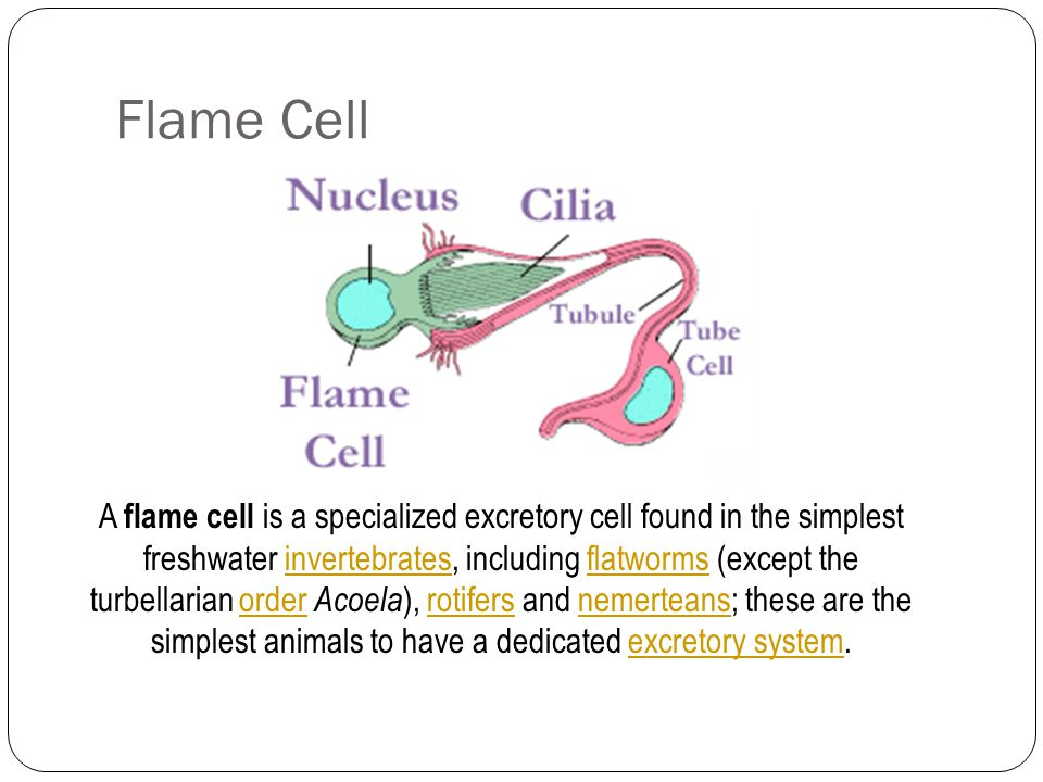 Flame Cell