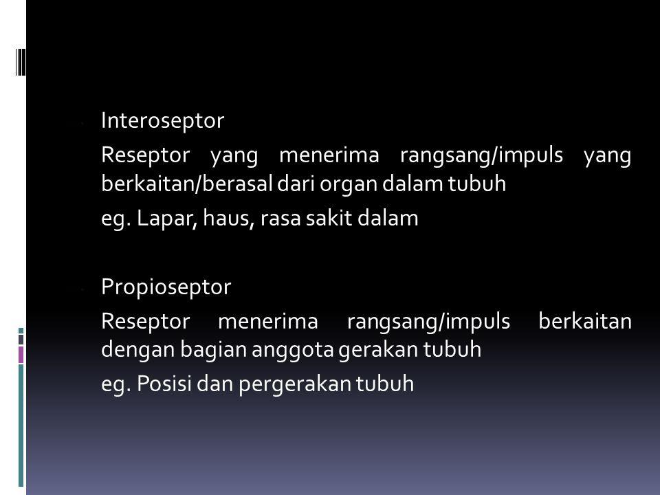 Interoseptor Reseptor yang menerima rangsang/impuls yang berkaitan/berasal dari organ dalam tubuh.