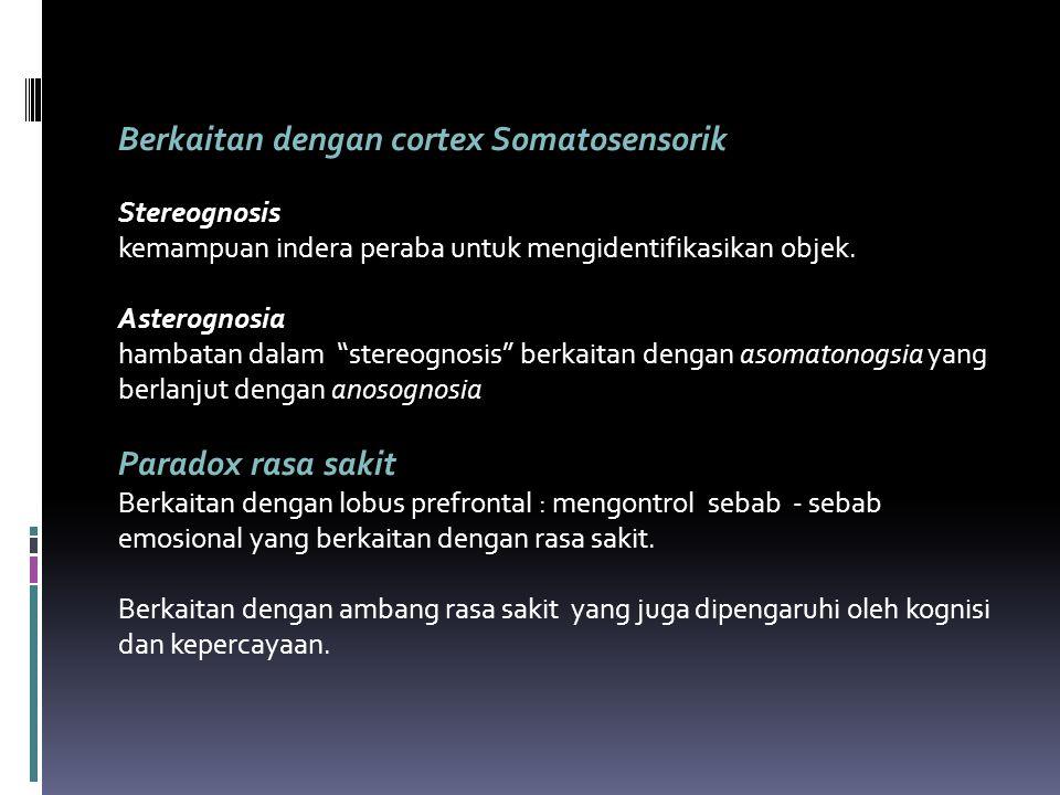 Berkaitan dengan cortex Somatosensorik