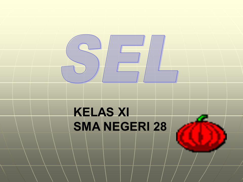 SEL KELAS XI SMA NEGERI 28