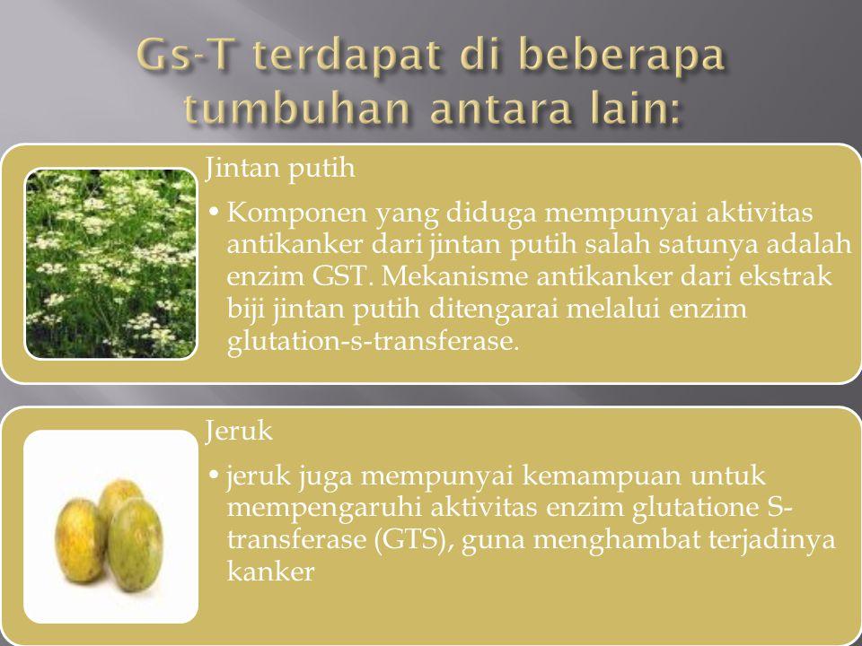 Gs-T terdapat di beberapa tumbuhan antara lain:
