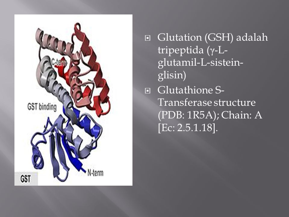 Glutation (GSH) adalah tripeptida (γ-L-glutamil-L-sistein-glisin)