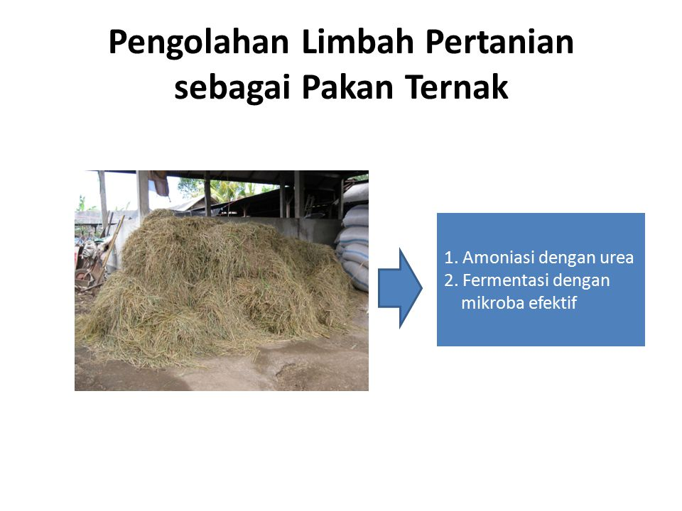 Pengolahan Limbah Pertanian sebagai Pakan Ternak