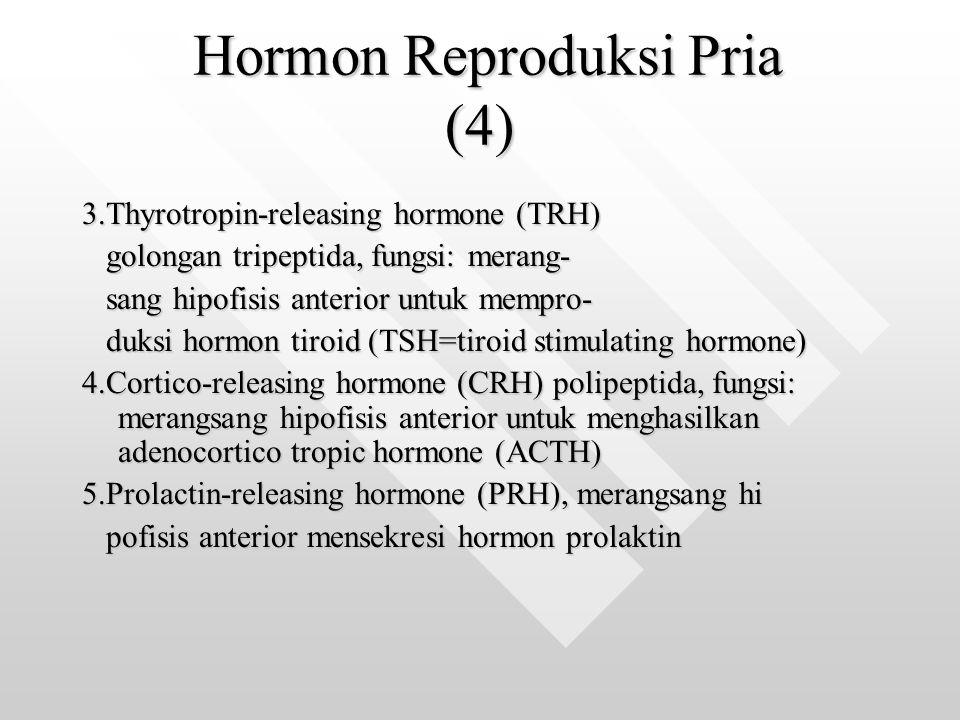 Hormon Reproduksi Pria (4)