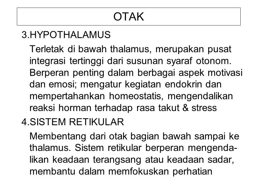 OTAK 3.HYPOTHALAMUS.