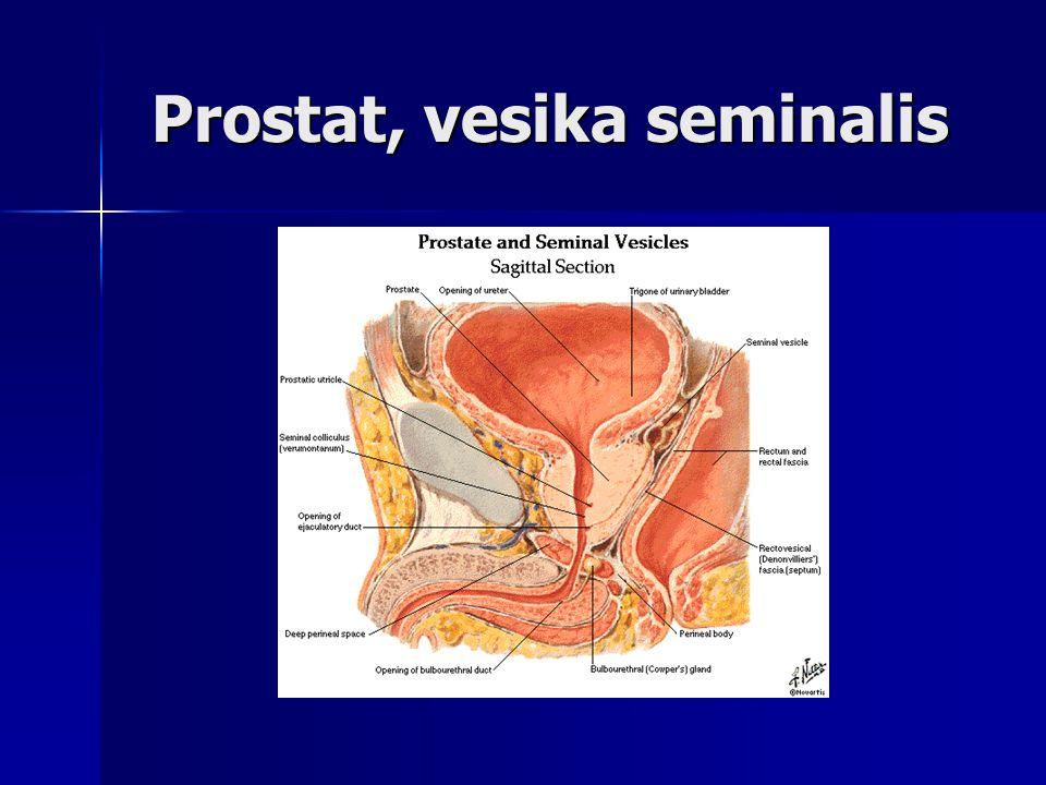 Prostat, vesika seminalis