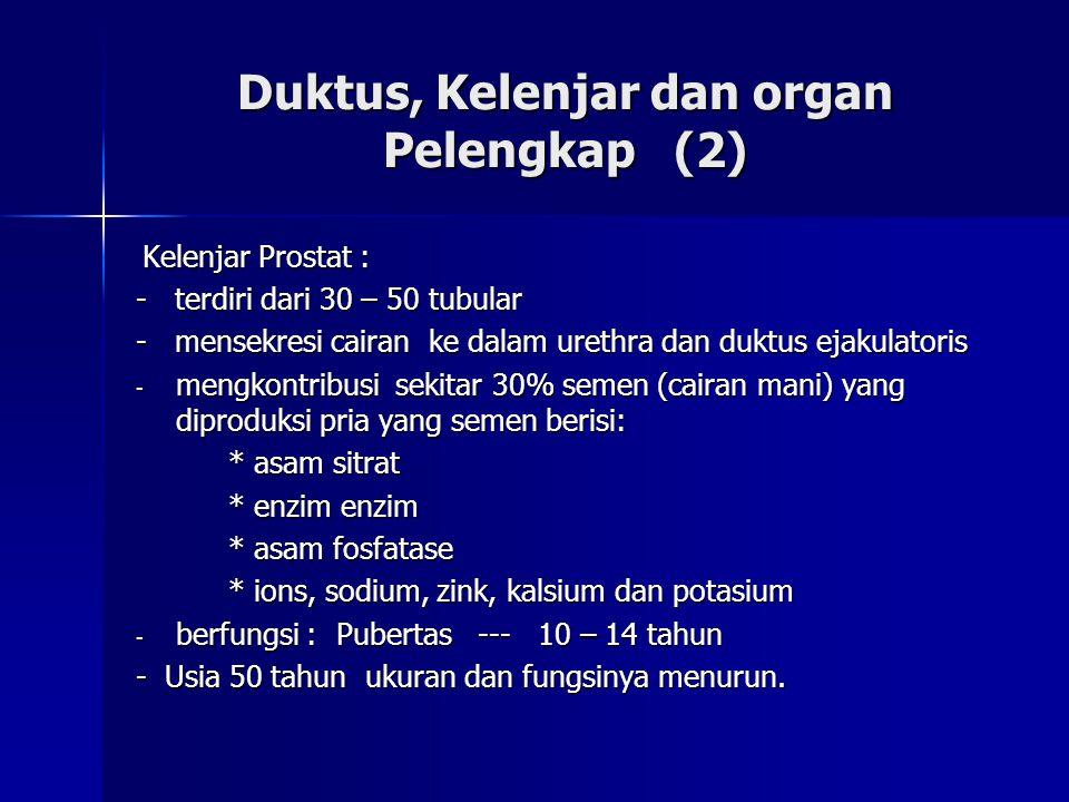 Duktus, Kelenjar dan organ Pelengkap (2)