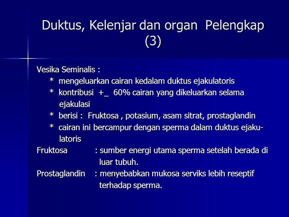 Duktus, Kelenjar dan organ Pelengkap (3)