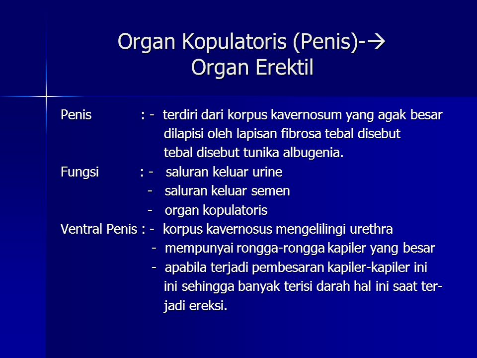 Organ Kopulatoris (Penis)- Organ Erektil
