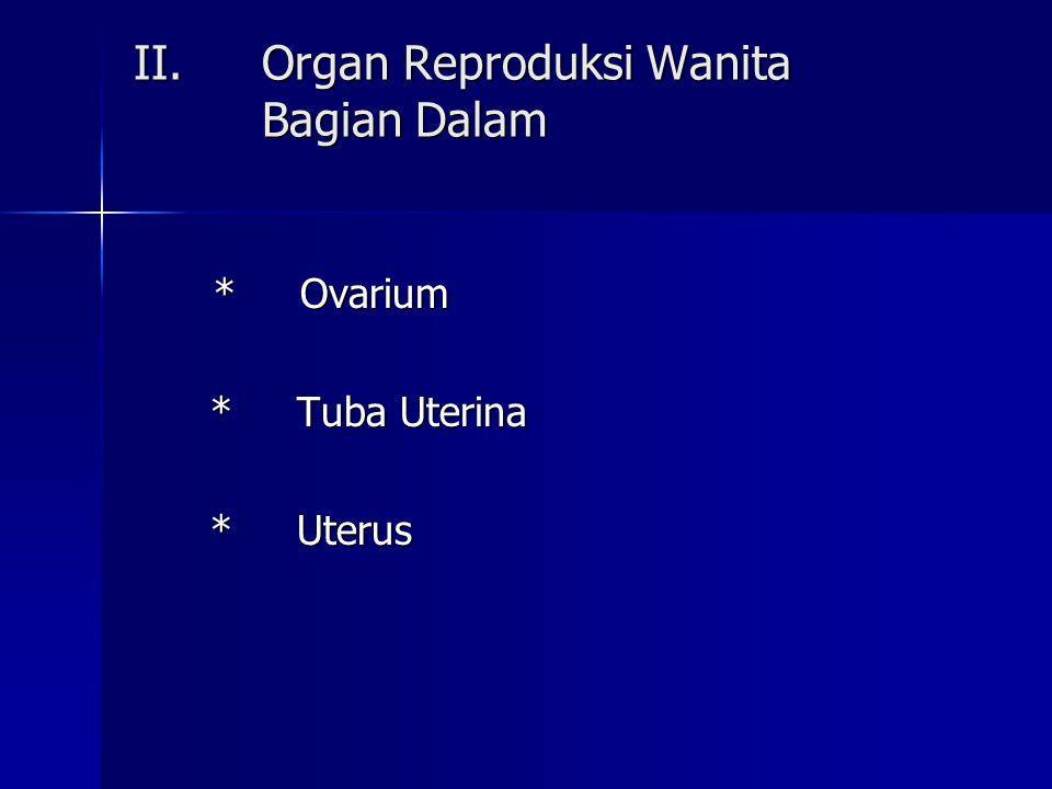 Organ Reproduksi Wanita Bagian Dalam