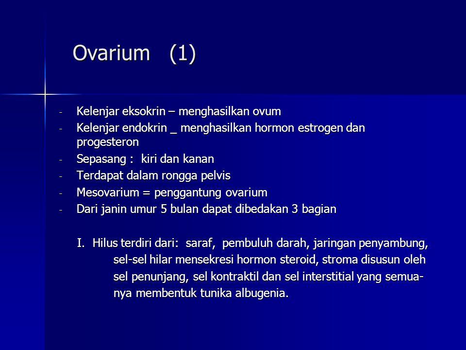 Ovarium (1) Kelenjar eksokrin – menghasilkan ovum. Kelenjar endokrin _ menghasilkan hormon estrogen dan progesteron.