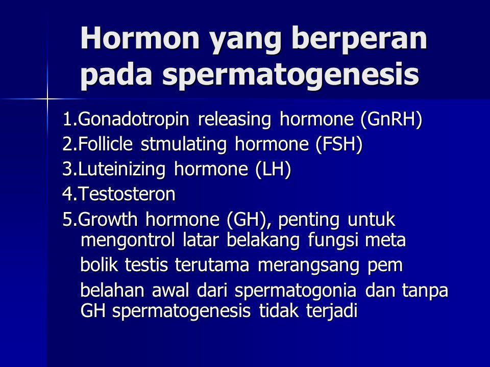 Hormon yang berperan pada spermatogenesis
